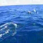 Delfines en Venezuela