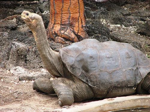 Paraíso terrenal en Galápagos – Ecuador