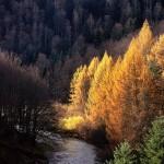 La Selva de Irati – El Paraíso de Navarra