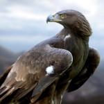 Convive con la naturaleza del Parque Natural de la Tenencia de Benifasar