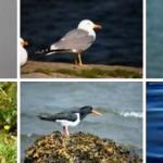 Vacaciones de Ornitología en Galicia