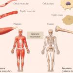 Fisioterapia aplicada al deporte: Prevención, curación y rehabilitación de lesiones del ejercicio físico