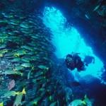 Isla del Coco (Costa Rica), un destino ideal para practicar el buceo
