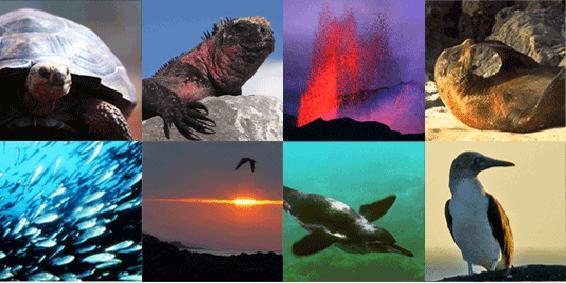 Los destinos más calientes: las islas volcánicas